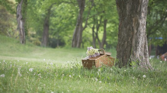 korea-picnic-1920x1080-hd-wallpaper.jpg
